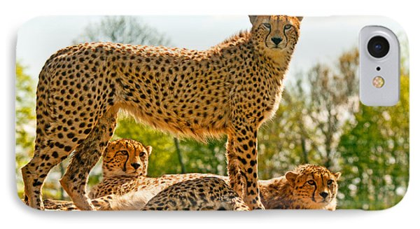 Cheetahs Three IPhone Case