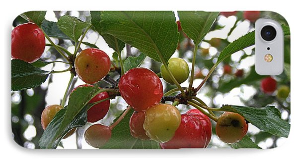 IPhone Case featuring the photograph Cherries In The Morning Rain by Angie Rea
