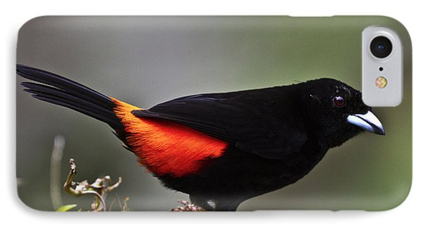 Cherrie's Tanager Phone Case by Heiko Koehrer-Wagner