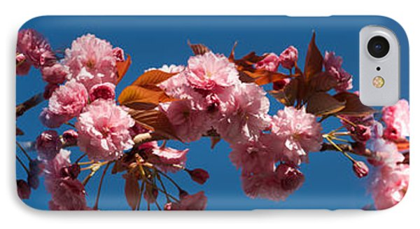 Cherry Blossom Flowers IPhone Case by Panoramic Images
