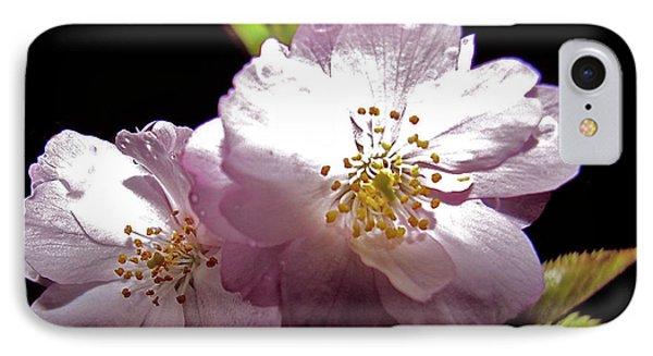 Cherry Blossoms Phone Case by Debra     Vatalaro
