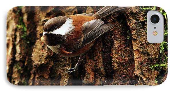 Chestnut-backed Chickadee On Tree Trunk Phone Case by Sharon Talson