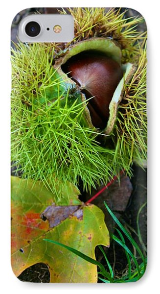 IPhone Case featuring the photograph Chestnut Fresh From The Tree by Polly Castor