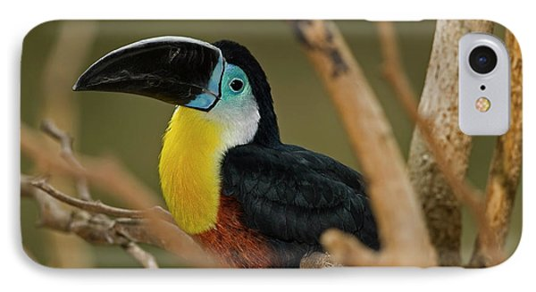 IPhone Case featuring the photograph Chestnut Mandibled Toucan by JT Lewis