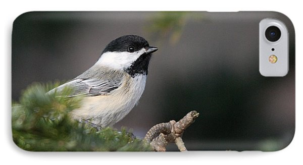 IPhone Case featuring the photograph Chickadee In Balsam Tree by Susan Capuano