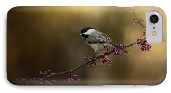 Chickadee In The Golden Light IPhone Case by Jai Johnson