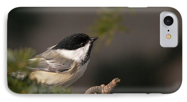 IPhone Case featuring the photograph Chickadee In The Shadows by Susan Capuano