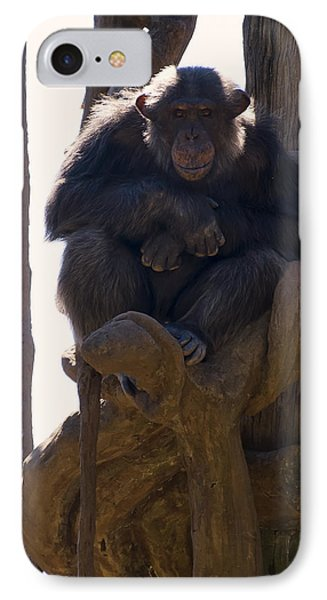 Chimpanzee In A Tree IPhone Case by Chris Flees