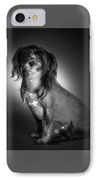 Chinese Crested - 01 IPhone Case by Larry Carr