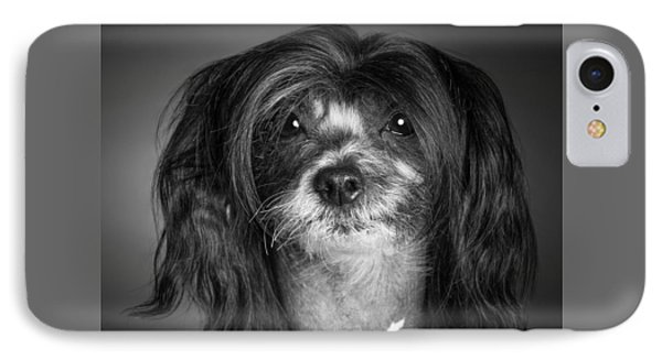 Chinese Crested - 02 IPhone Case by Larry Carr