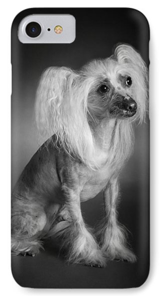 Chinese Crested - 03 IPhone Case by Larry Carr