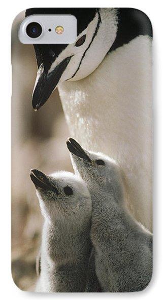 Chinstrap Penguin Pygoscelis Antarctica Phone Case by Tui De Roy