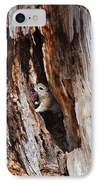 IPhone Case featuring the photograph Chipmunk - Eager Arizona by Donna Greene
