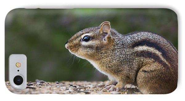 Chipmunk   Phone Case by Andrea Silies