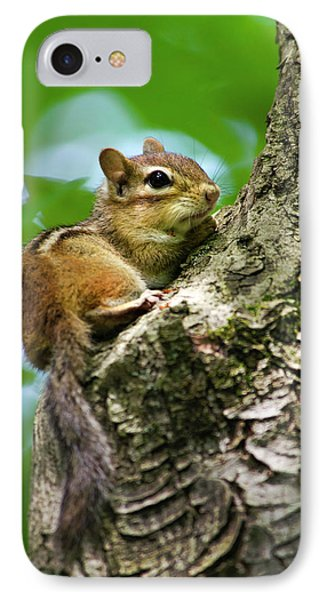Chipmunk On A Limb Phone Case by Christina Rollo