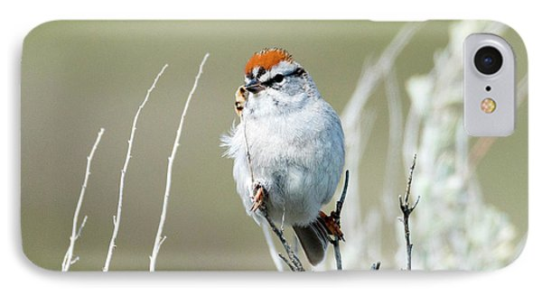 IPhone Case featuring the photograph Chipping Sparrow by Mike Dawson