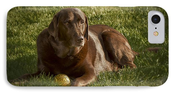 Chocolate Lab At Rest IPhone Case by Jean Noren