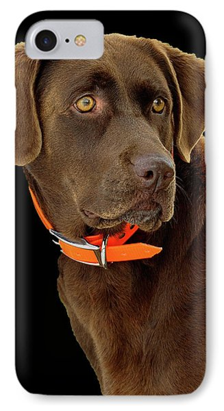Chocolate Lab IPhone Case