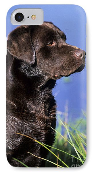 Chocolate Labrador IPhone Case by Jean-Louis Klein & Marie-Luce Hubert