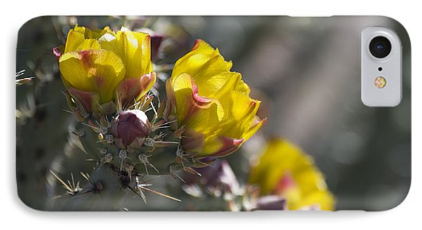 Cholla Blooms IPhone Case by Sue Cullumber