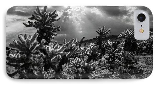 IPhone Case featuring the photograph Cholla Cactus Garden Bathed In Sunlight In Black And White by Randall Nyhof