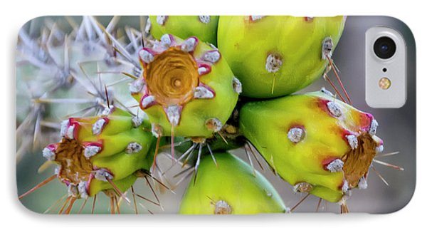 IPhone Case featuring the photograph Cholla Fruit S48 by Mark Myhaver
