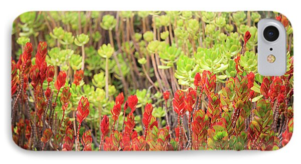 IPhone Case featuring the photograph Christmas Cactii by David Chandler
