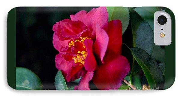 Christmas Camellia IPhone Case by Marie Hicks
