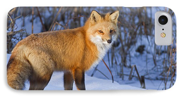 Christmas Fox IPhone Case by Mircea Costina Photography