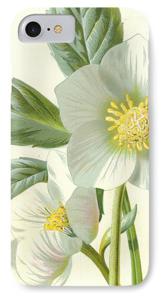 Christmas Rose IPhone Case by Frederick Edward Hulme
