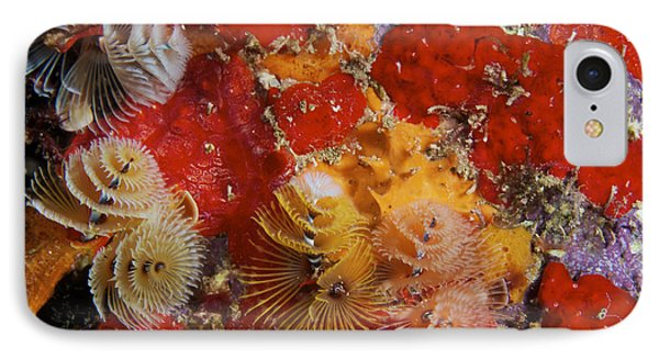 Christmas Tree Worms, Bonaire Phone Case by Terry Moore