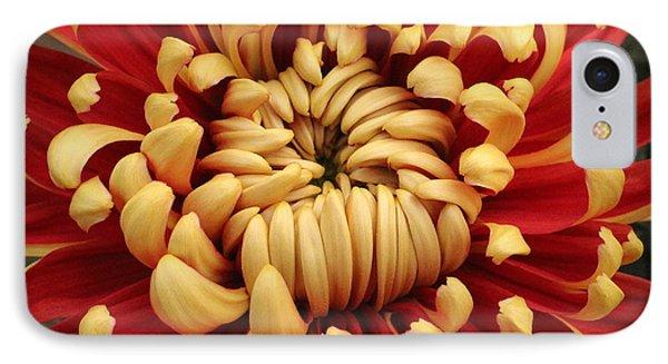 Chrysanthemum In Full Bloom IPhone Case
