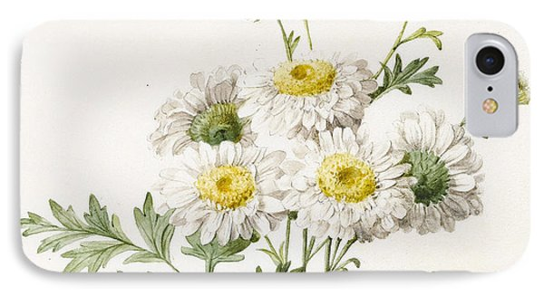 Chrysanthemums IPhone Case by Louise D'Orleans