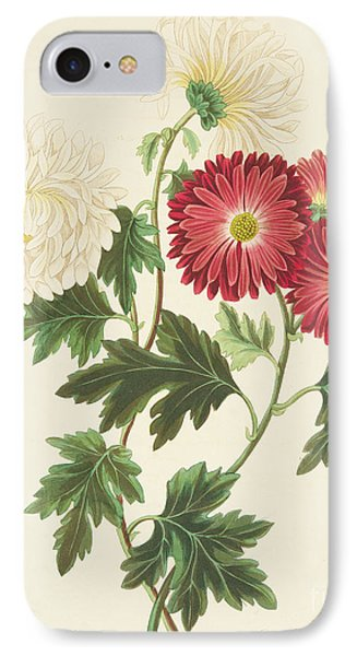 Chrysanthemums IPhone Case by Margaret Roscoe