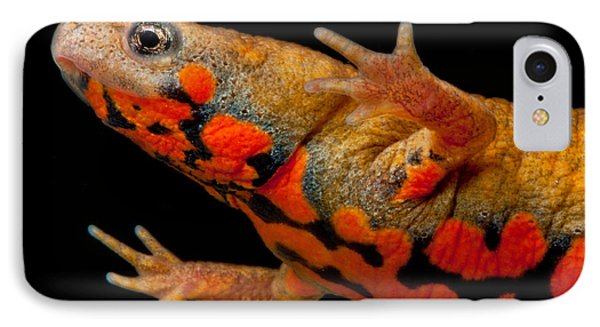 Chuxiong Fire Belly Newt IPhone Case by Dant� Fenolio