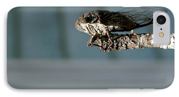 Cicada IPhone Case by Cathy Harper