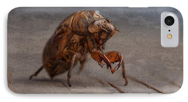 Cicada Shell IPhone Case by Tom Mc Nemar
