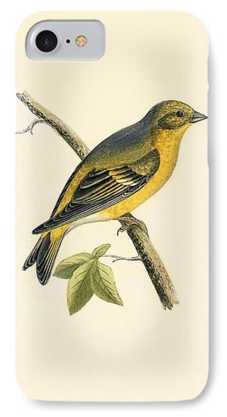 Citril Finch IPhone 7 Case by English School