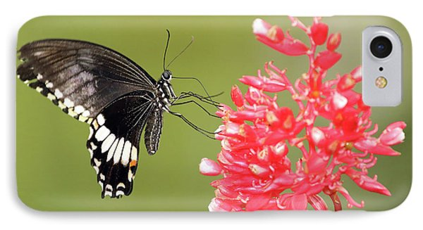 IPhone Case featuring the photograph Citrus Swallowtail by Grant Glendinning