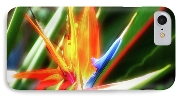IPhone Case featuring the photograph City Flare Bird Of Paradise by Aimee L Maher Photography and Art Visit ALMGallerydotcom