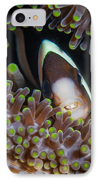 Clarks Anemone Fish IPhone Case by J Gregory Sherman