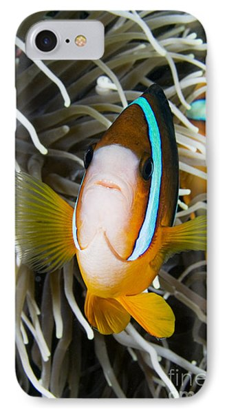 Clarks Anemonefish IPhone Case by Dave Fleetham - Printscapes