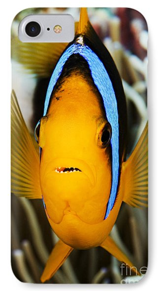 Clarks Anemonefish Face IPhone Case by Dave Fleetham - Printscapes