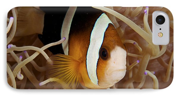 Clarks Anemonefish IPhone Case by Steve Rosenberg - Printscapes