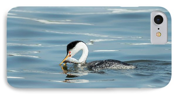 IPhone Case featuring the photograph Clarks Grebe by Everet Regal