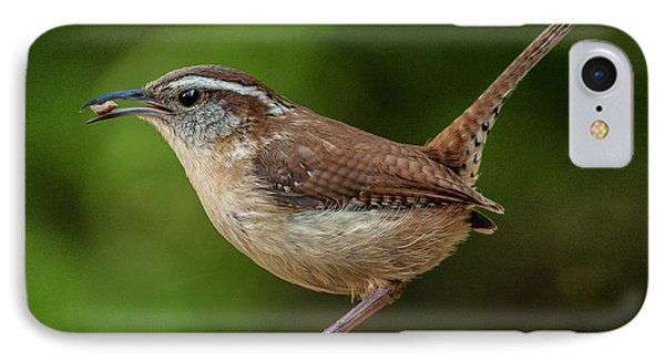 Classic Carolina Wren IPhone Case