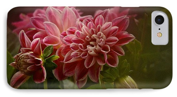 Classic Dahlia 2016 IPhone Case by Richard Cummings