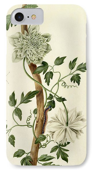 Clematis Florida With Butterfly And Caterpillar IPhone Case