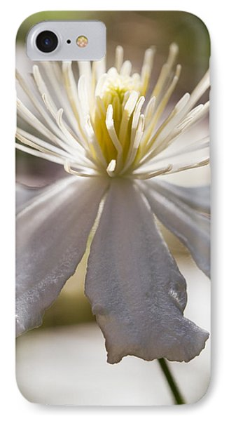 Clematis In Sunshine IPhone Case by Lise-Lotte Larsson