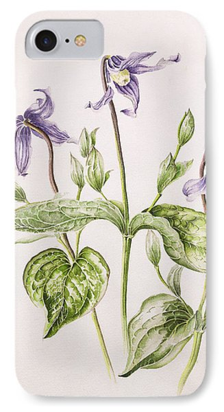 Clematis Integrifolia IPhone Case by Alison Cooper